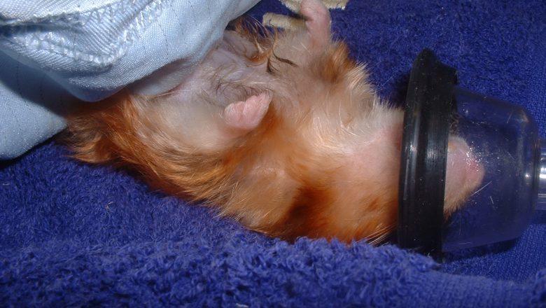 Hammy, an unusual hamster | Pete the Vet