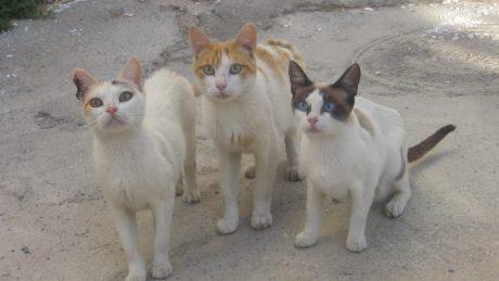 118spanishcats (2)