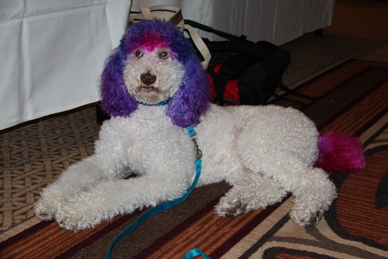 Dogs and cats in clothes and with hairstyles at Blogpaws