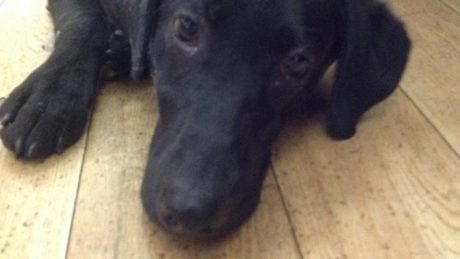 Finzi, the rescue dog, accompanied Pete the Vet on his weekly vet pet care spot on Ireland AM