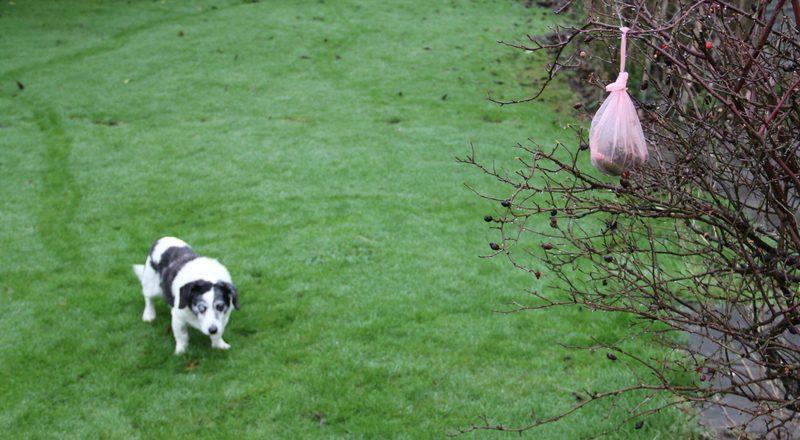 Dog faeces is dangerous and unpleasant