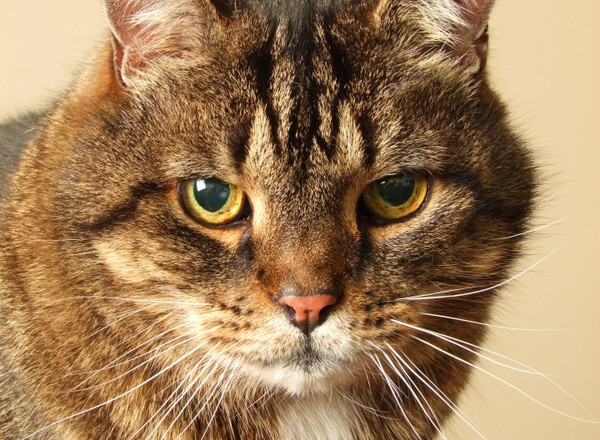 Jake Is 14 Years Old And Has Kidney Disease Which Is One Of The Most Common Conditions To Affect Older Cats Pete The Vet