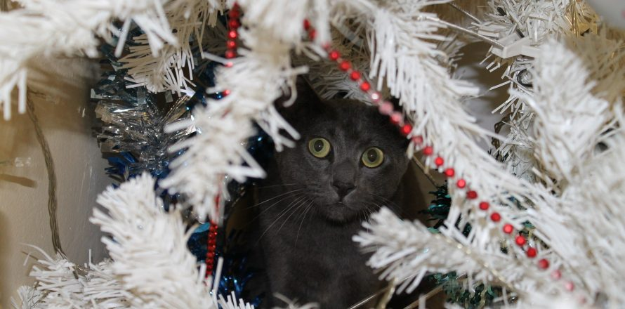 Christmas gifts for pet lovers in 2013 by Pete the Vet