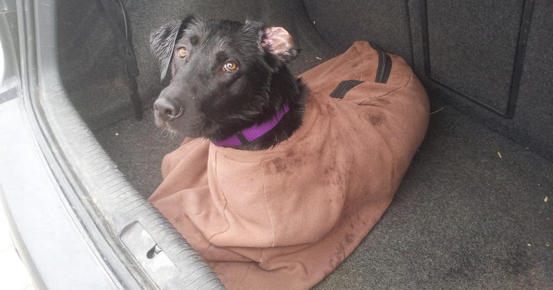 Finzi loves being zipped into  her cosy drying bag