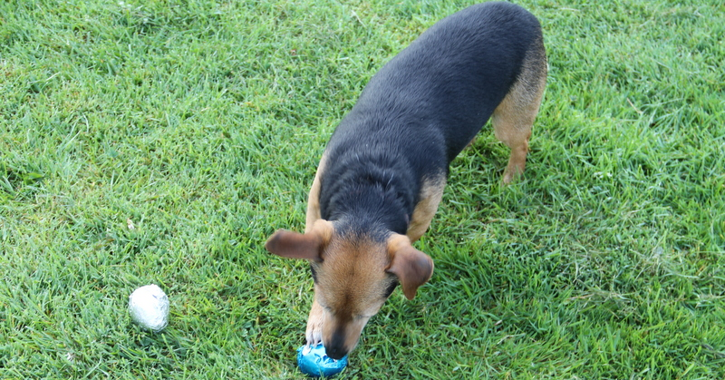 """The Easter box included special carob """"dog friendly"""" Easter Eggs"""