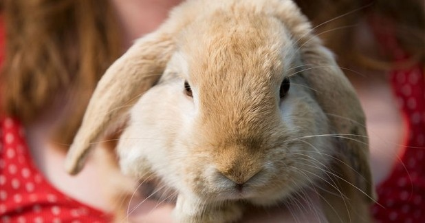 Pete the Vet Podcast: Rabbit Awareness Week - how to improve the lives of pet rabbits
