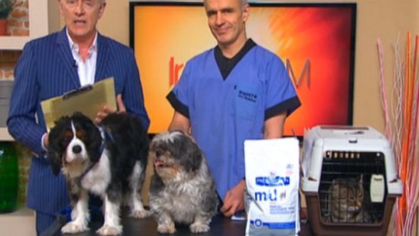 Ireland AM is running Project Pet Slimdown for obese pets in Ireland