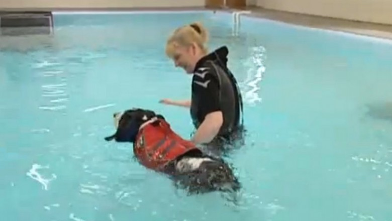 Hydrotherapy is a novel and effective way for dogs to exercise