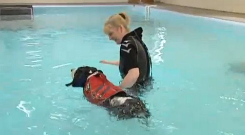 Pete The Vet On Ireland Am Hydrotherapy For Dogs In Ireland