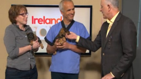 A live demonstration of microchipping a puppy on Ireland AM this week