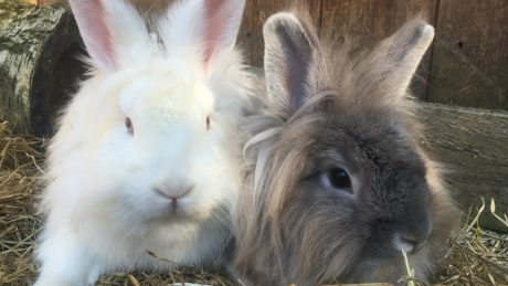 Paloma and Horton (2)