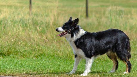 dog-1548176_1280