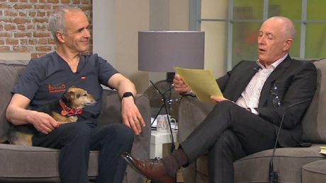 TV vet discusses holiday pet care on breakfast television in Ireland