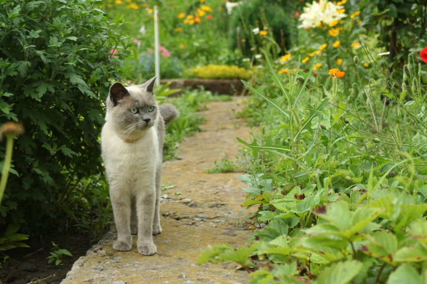 Scents To Keep Cats Away