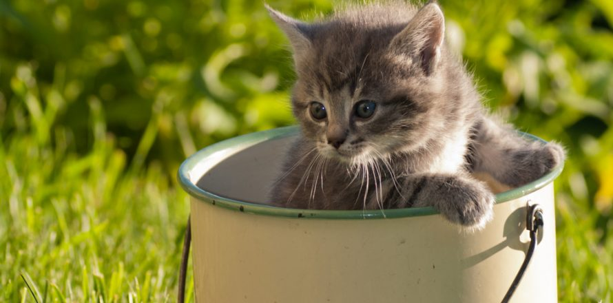 Guest Post How To Keep Cats Out Of The Garden Pete The Vet