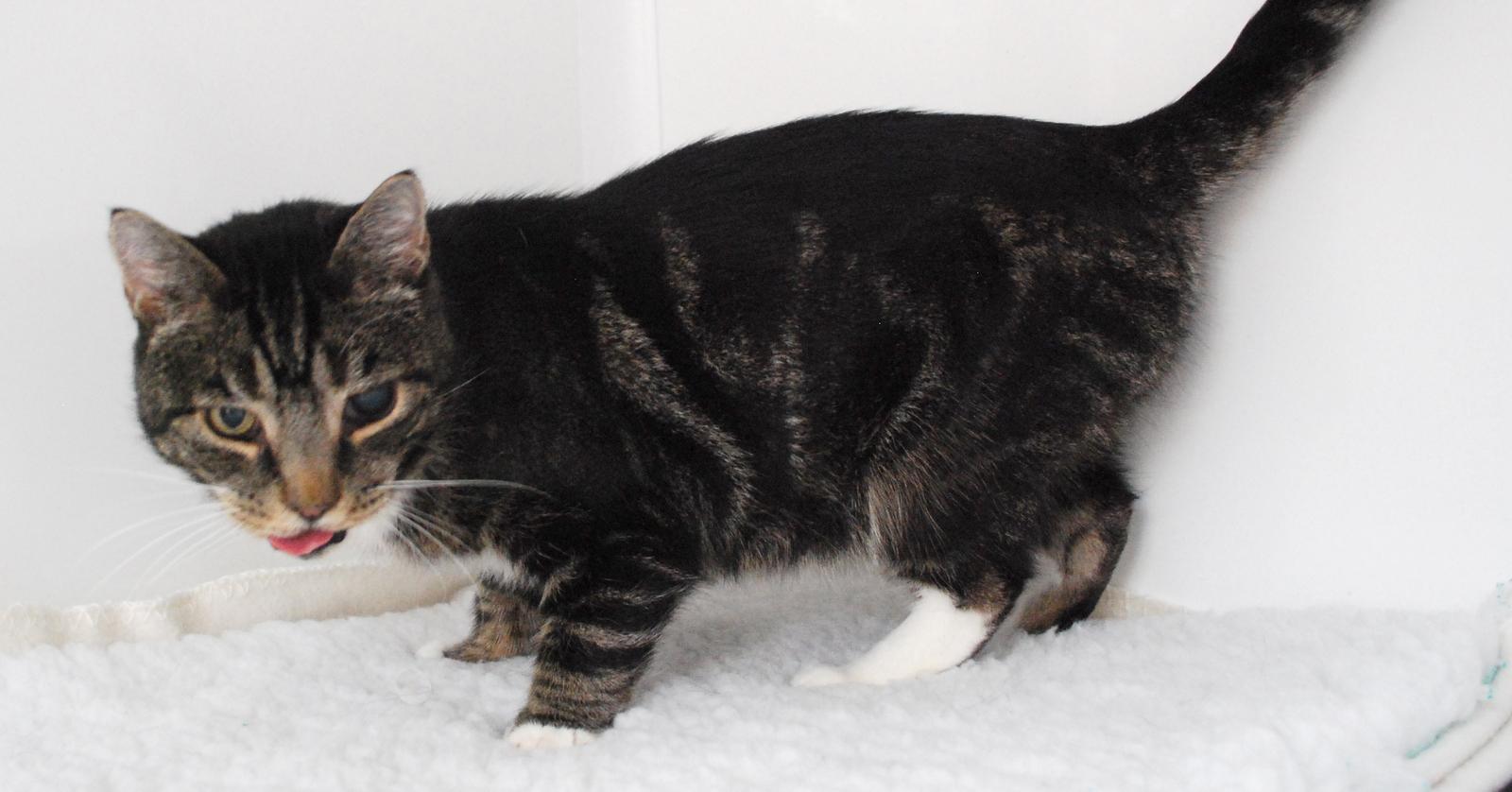 Cat Rescue Taunton