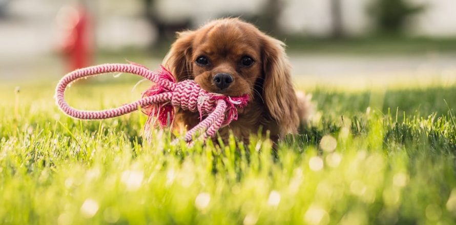 Guest Post: 5 Great Tips For Gardening With Dogs | Pete the Vet
