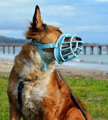 Muzzles in dogs: what type is best, and how to use them properly