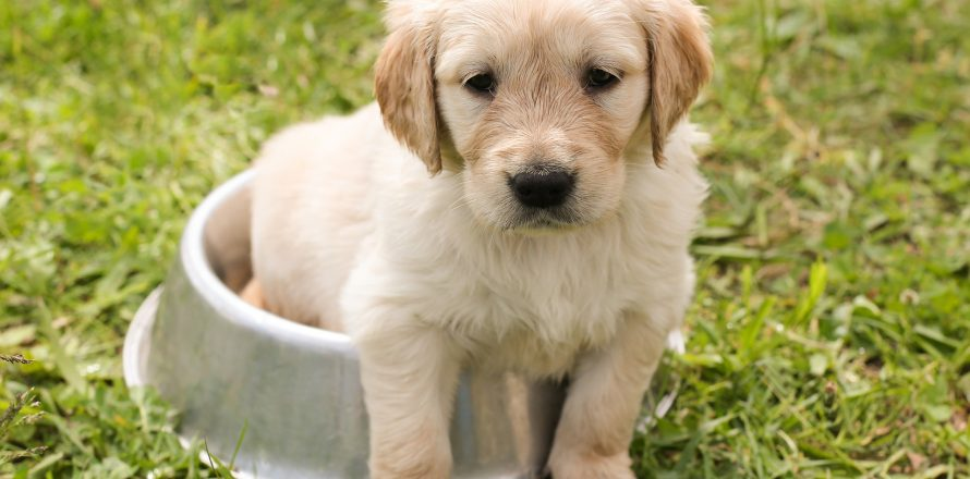 How To House Train Puppies Video Of Pete The Vet On Ireland Am